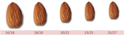 sizes of almonds